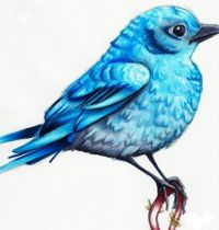 Amazing bluebird tattoo design