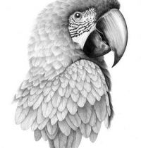 Bird design with parrot
