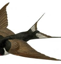 Brown swallow tattoo design