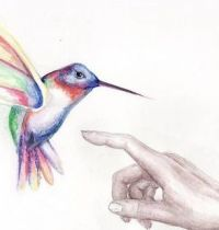 Colourful hummingbird and hand