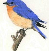 Cute bluebird tattoo design