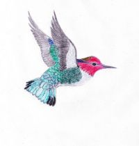 Draw of hummingbird tattoo