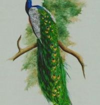 Green tail of peacock tattoo