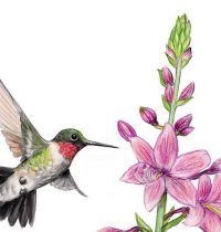 Hummingbird and lilies tattoo design