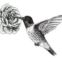 Hummingbird with flower tattoo design