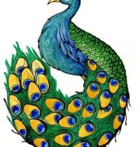Peacock with amazing tail tattoo design