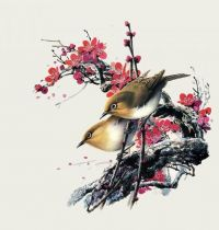 Sparrow on branch with cherry blossom