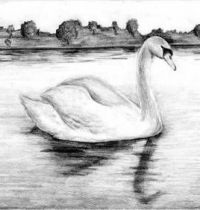 Swan on the lake tattoo design