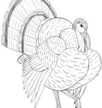 Turkey bird tattoo design