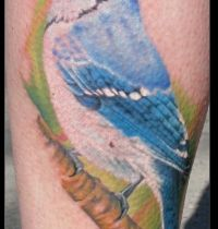 Bbluebird as arm tattoo