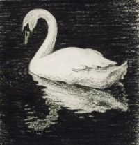 White swan on black water tattoo design