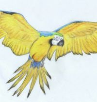 Yellow parrot tattoo design