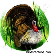 Brown turkey in the grass as tattoo design