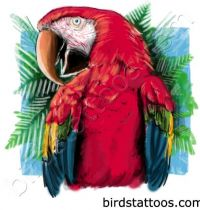 Red parrot tattoo design
