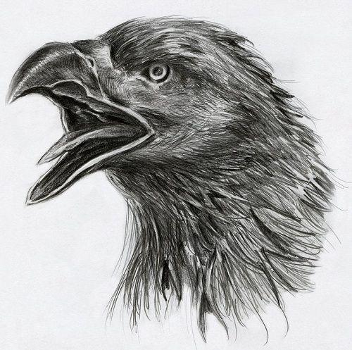 Black eagle head tattoo design