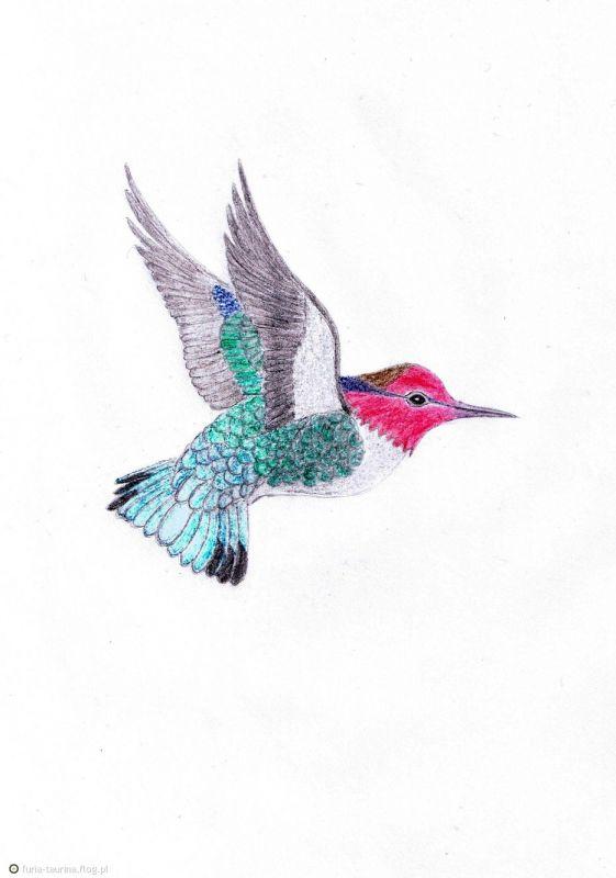 Draw of hummingbird tattoo