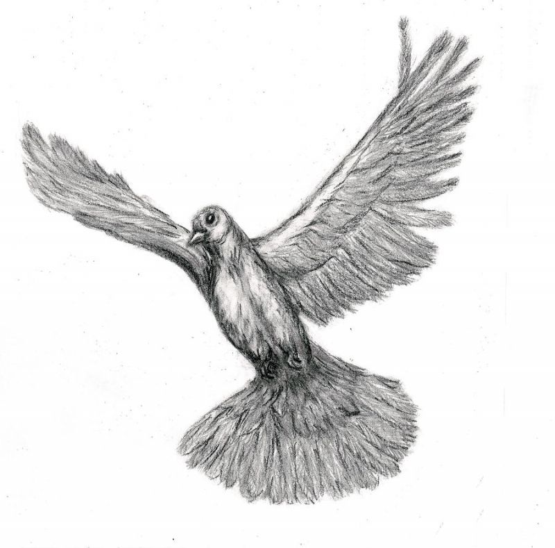 Grey dove tattoo design
