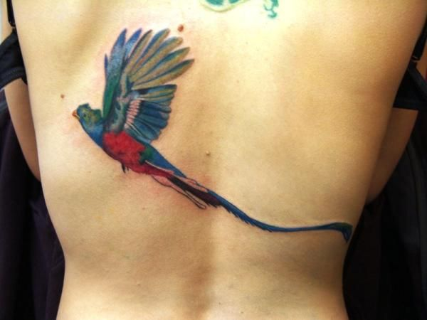 Parrot with long tail tattoo