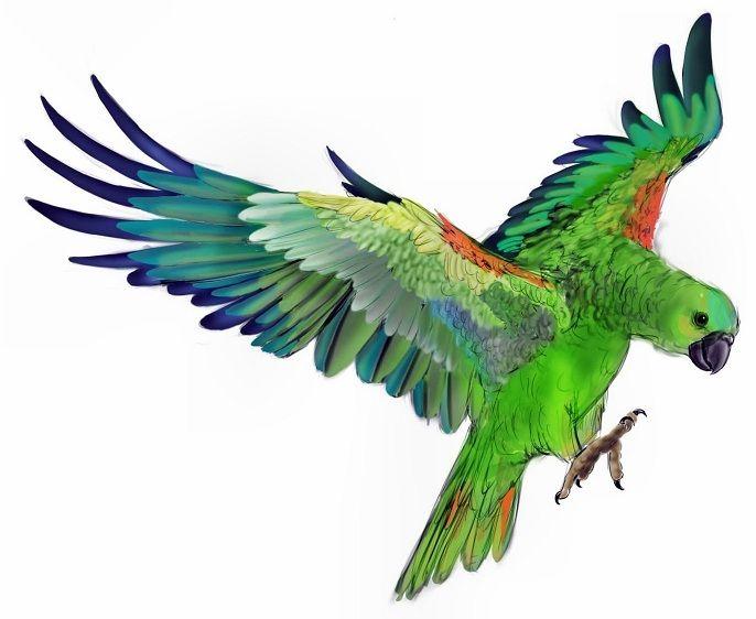 Tattoo design of green parrot