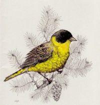 Black and yellow bird tattoo design