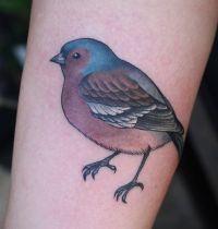Colourful sparrow tattoo on arm