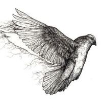 Cool dove tattoo design