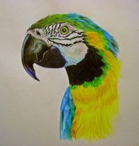 Design with parrot head