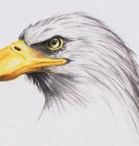 Eagle with yellow beak tattoo design