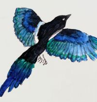 Magpie with blue feathers tattoo design