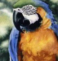 Natural colours parrot design
