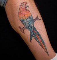 Nice parrot tattoo