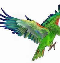 Tattoo design of green parrot