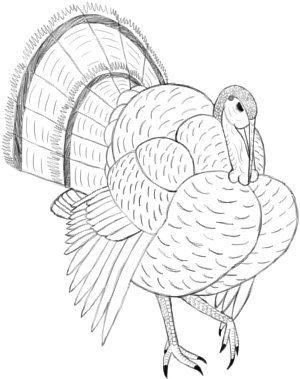 Turkey bird tattoo design