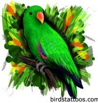 Green parraot tattoo design